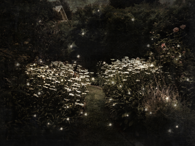 Summer magic — lightning bugs and daisies